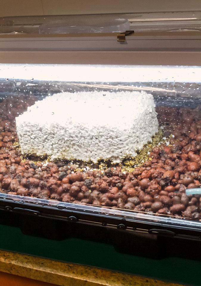 Гроубокс для выращивания грибов 44