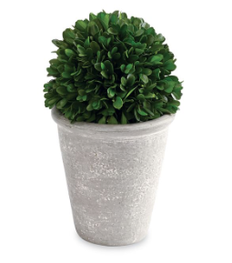 Mud Pie Boxwood Ball In Pot