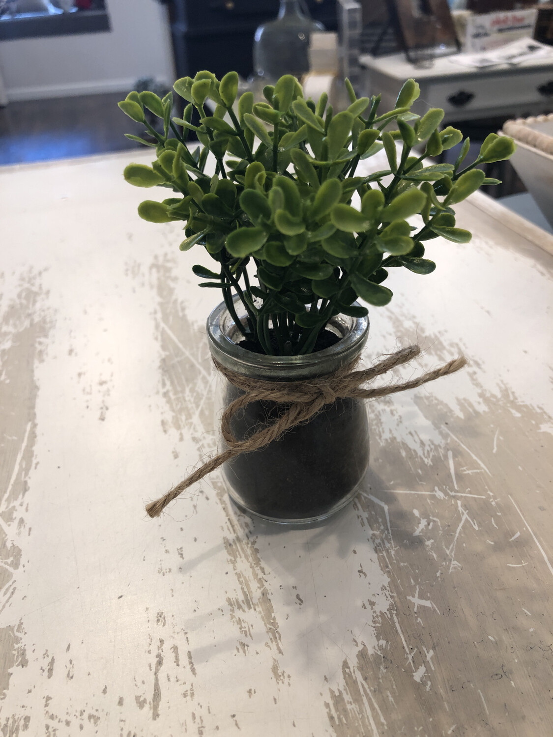 Mini Glass Potted Plant Various Type
