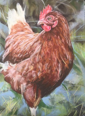 Brown Hen - A4 Pastel Sketch