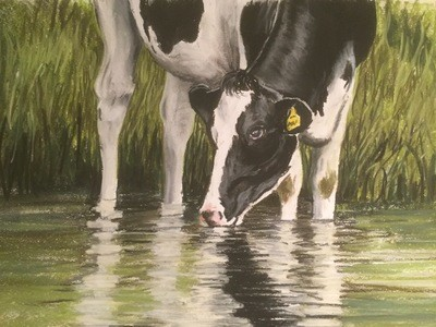 Cow Drinking - A4 Pastel Sketch