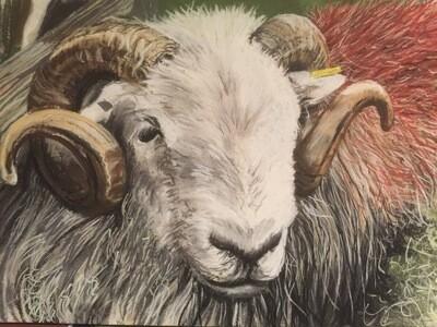 Langdale Ram - A4 Pastel Sketch