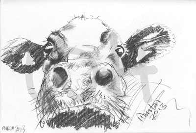 Cow Sketch Two - A4 Sketch