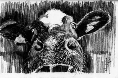 Cow Sketch Three - A4 Sketch