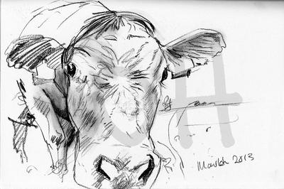 Cow Sketch Five - A4 Sketch