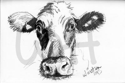 Cow Sketch Six - A4 Sketch