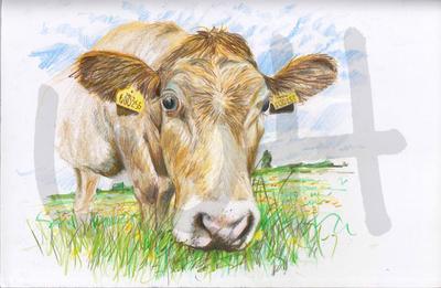 Cow Sketch Seven - A4 Sketch