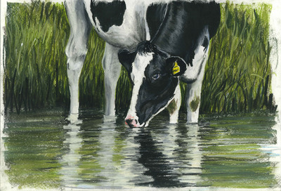 Black and White Cow (A3)