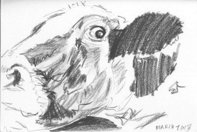 Nosey Cow Sketch - A4 Sketch