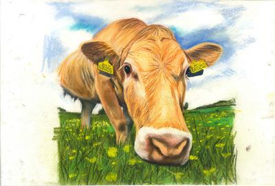Daisy Cow - A4 Pastel Sketch