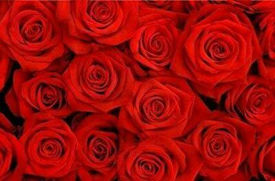 Loco Enamorado - 1,000 rosas 😎