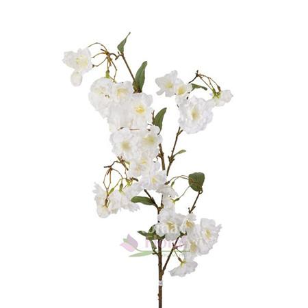 White Silk Yoshino Cherry Blossom Branch