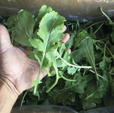 Second Cut Arugula - 3lbs - $15.00