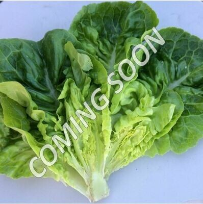 Little Gem Romaine - 3lbs