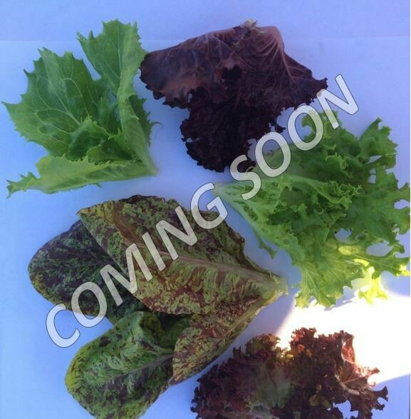 Super Baby Lettuce Mix
