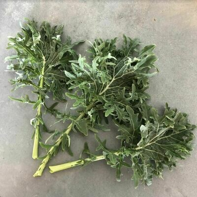 Siberian Kale - 1bu - $1.50