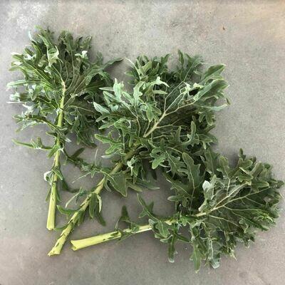 Siberian Kale - 12ct - $14