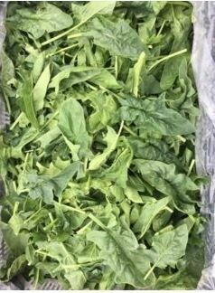 Saute' Bloomsdale Spinach - 5lb - $15