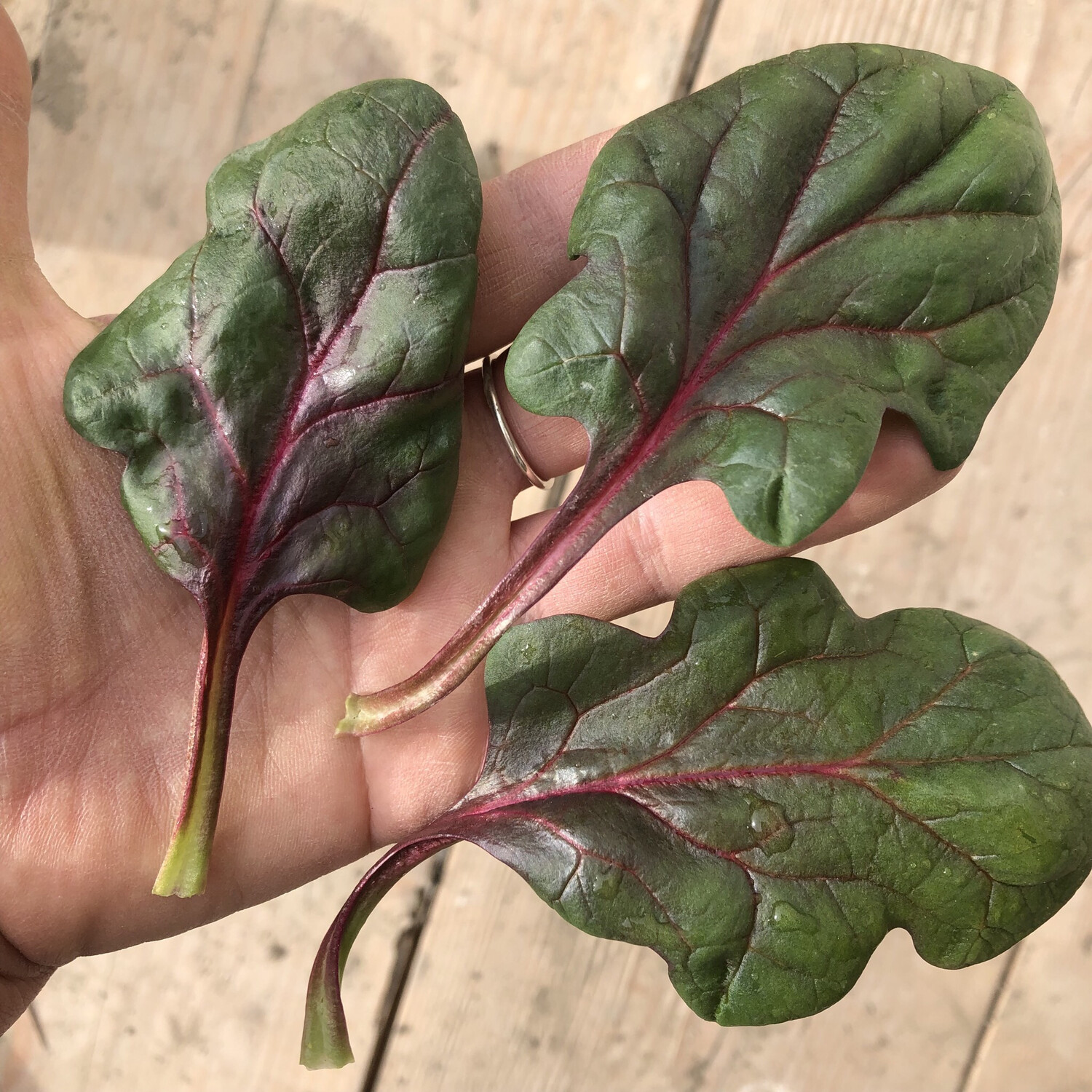 Red Veined Spinach - 1lb - $8