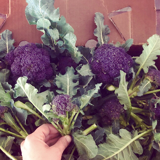 Purple Sprouting Broccoli - 5lbs - $25