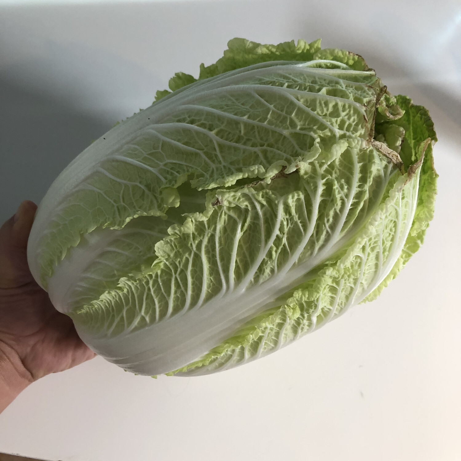 Green Napa Cabbage - 1lb - $1