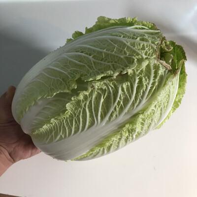 Green Napa Cabbage - 20lb - $15