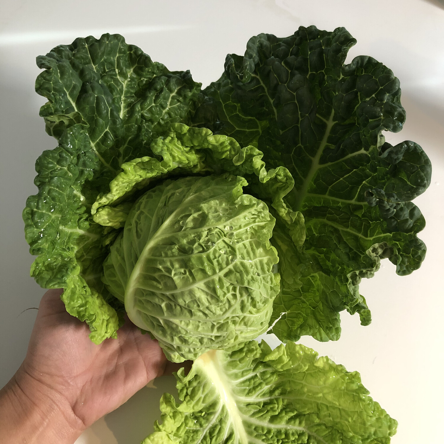 Savoy Cabbage - 1lb - $3