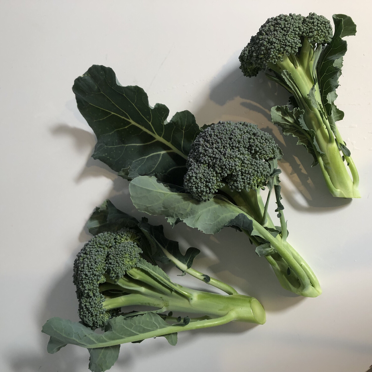 Green Magic Broccoli - 1lb - $4