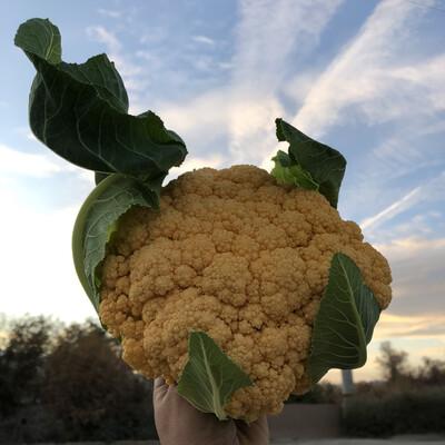 Cheddar Cauliflower - 10lb - $40