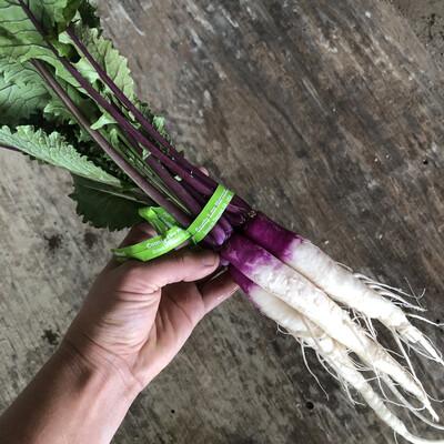 Hinona Kabu Turnips - 1bu - $3