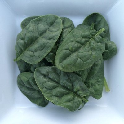 Baby Bloomsdale Spinach - 4lbs - $18