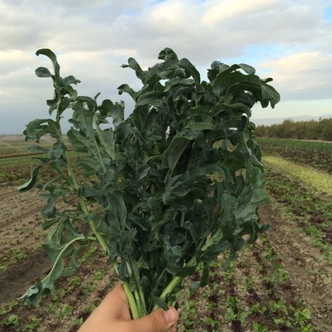 Bunched Spigariello Kale - 12ct - $12