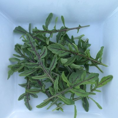 Red Dragon Rucola - 3#