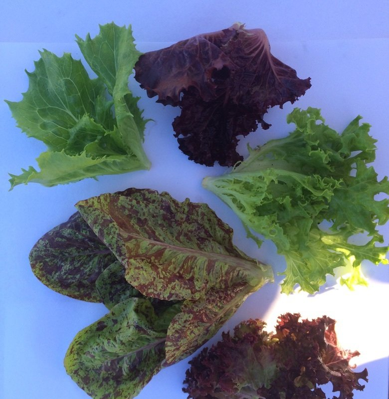 Super Baby Lettuce Mix