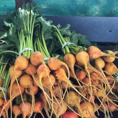Baby Gold Beets - 12 bunches