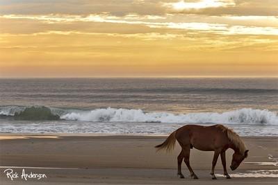 Wild Horse at Sunrise - Carova Beach, NC