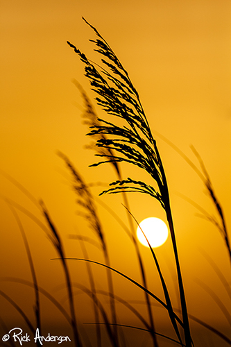 """""""Summer Sunrises"""" Hatteras Island, NC"""