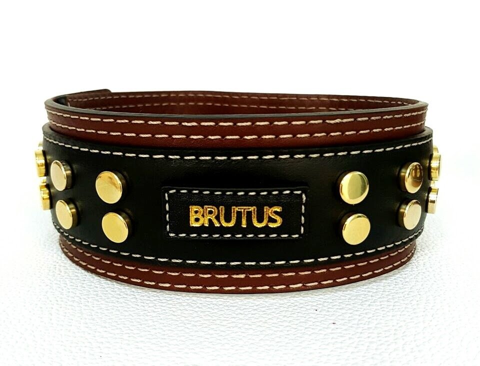 Mod. Brutus