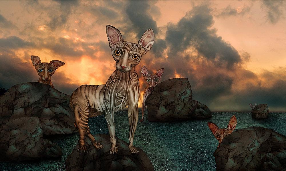 Sphinx Cat Family