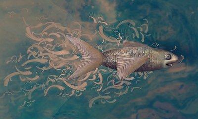 Pisces fleeing humans