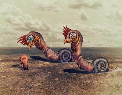 Cock Snails