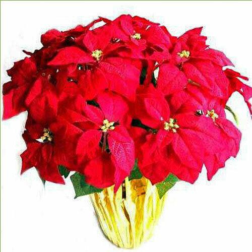 Happy Holidays Poinsettia