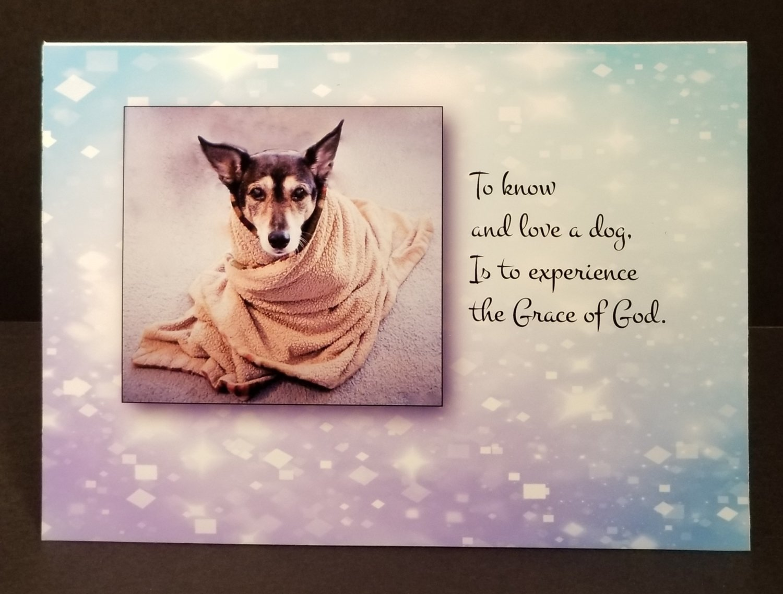 Dog Pet Sympathy