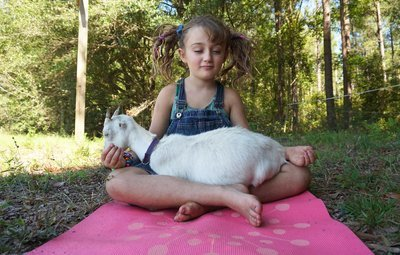 Gift Certificate for Goat Yoga to be held at Tidal Creek Co-op in 2019!