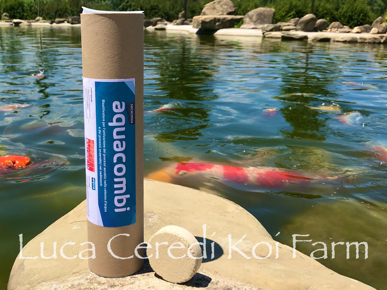 batteri depuranti in compresse specifico per il fondale Aquacombi 00187