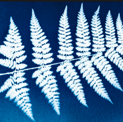 Cyanotype (Sun) Printing, Wed 16th Jan, 1-3pm. (Ages 8-14yrs)