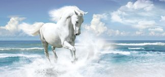 Белая грация. Фотообои, лошадь. Размер: 291х136 см.