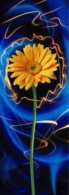 Поэма цвета-2.  Фотообои, красивые цветы.  Размер: 97х272 см.