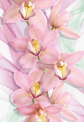 Орхидеи.  Фотообои. Размер: 136х194 см.
