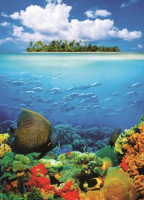 Артикул 374. Подводный мир. Яркие фотообои. Размер: 183х254 см.